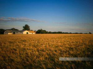 Idyllischer Bauernhof im Abendlicht auf der Insel Bornholm
