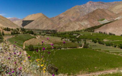 Valle del Elqui und La Serena – in Kleinen Norden Chiles
