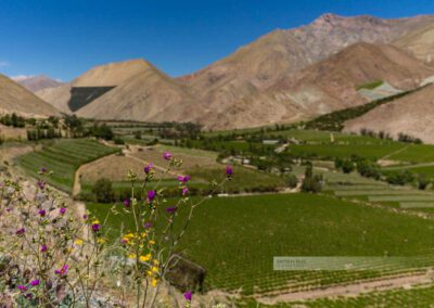 Das Elquital (Valle de Elqui) mit Blick auf die Weinberge