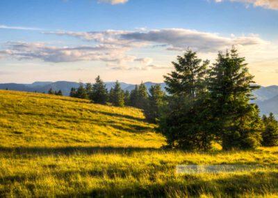 warmes Abendlicht in den Vogesen, hohe Berge dahinter