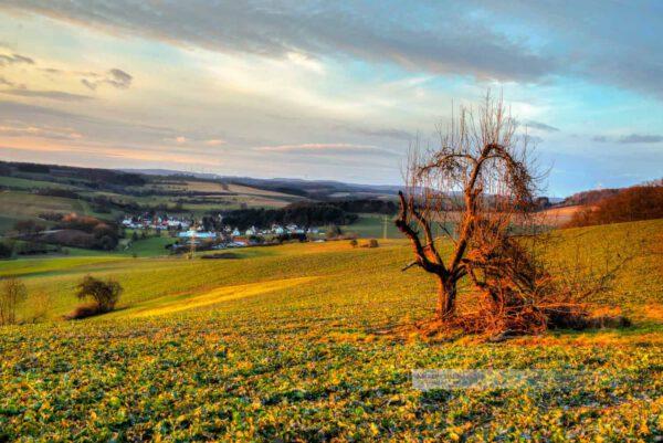 Malerischer Sonnenuntergang in der Westpfalz. Alter Baum im Vordergrund. Schöne Wolken am Himmel