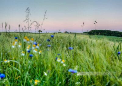 Blick auf den Wasserhochbehälter am Sangerhof, Blumen im Vordergrund (Westpfalz, Kreis Kusel, Pfälzer Bergland)