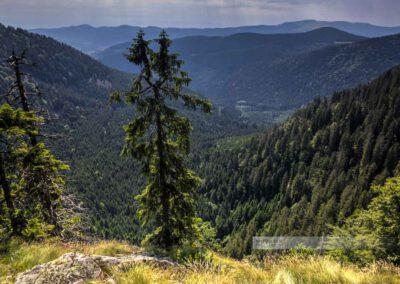 Blick in das Steil abfallende Tal entlang des Sentier des Roches