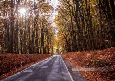 Eine Landstraße führt durch den Herbstwald in der Nähe von Wahnwegen und Ohmbach